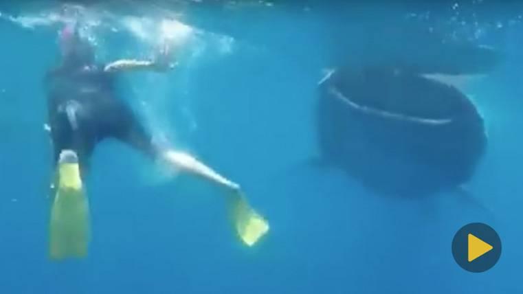 Problemas para Ramos después de bucear entre tiburones