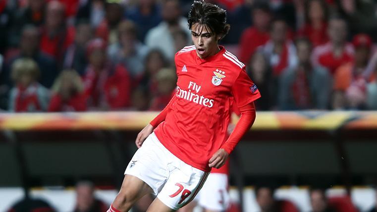 Joao Félix en un partido con el Benfica